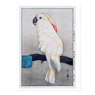 オオバタン・オウム, Salmon-crested cockatoo, Yoshida Postcard
