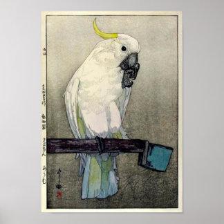 キバタン・オウム, Sulphur-crested cockatoo, Yoshida Poster