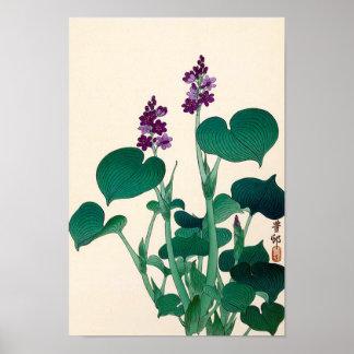 ギボウシの花, 古邨 Purple Flowering Hosta, Ohara Koson Poster