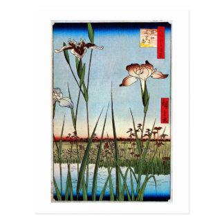 江戸の菖蒲, 広重 Iris of Edo, Hiroshige Postcard
