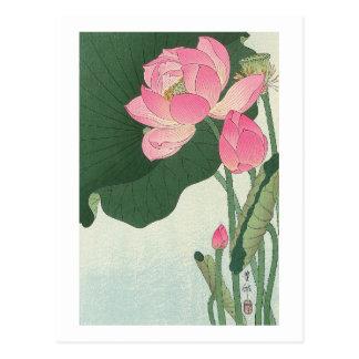 蓮の花, 小原古邨 Lotus flower, Ohara Koson, Ukiyo-e Postcard