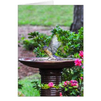 030 Bluebird Bath Card 5x7 Matte