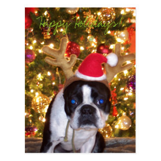 100_1071, Happy Holidays! Postcard