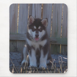 100_2932, St Francis Malamutes Mouse Pad