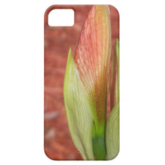 102a Amaryllis Apple blossom bud iPhone 5 Covers