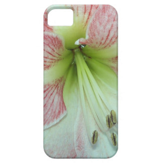104a Amaryllis Apple Blossom open 2 iPhone 5 Covers