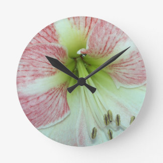 104a Amaryllis Apple Blossom open 2 Round Clock