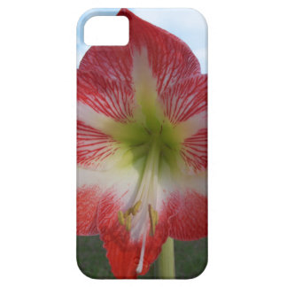 106a Amaryllis red and white MegaStar2 Barely There iPhone 5 Case