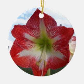 106a Amaryllis red and white MegaStar2 Ceramic Ornament