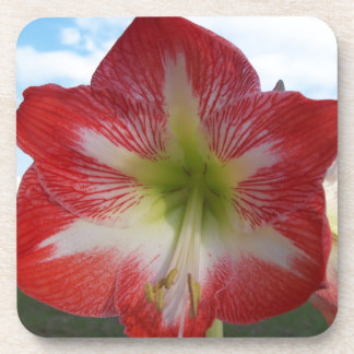 106a Amaryllis red and white MegaStar2 Coaster