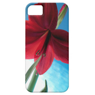 108a Vivid red Amaryllis Flower Barely There iPhone 5 Case
