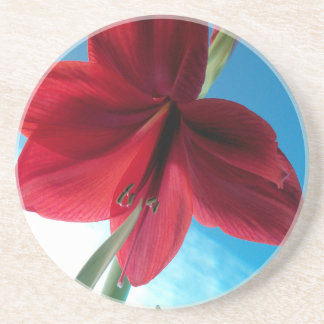 108a Vivid red Amaryllis Flower Coaster