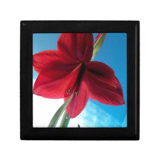 108a Vivid red Amaryllis Flower Gift Box