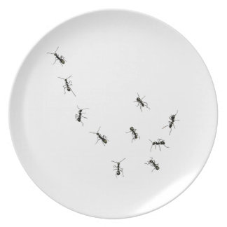 10 ants plate