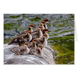 10  Little Mergansers Sitting on a Rock Card
