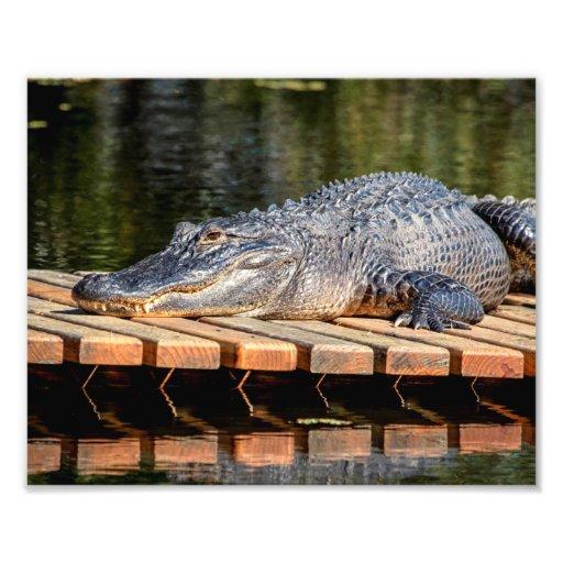 10x8 Alligator at Homosassa Springs Wildlife State Art Photo