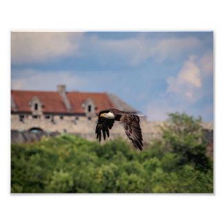 10x8 Bald Eagle passing Fort Ticonderoga Photo Print