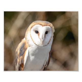10x8 Barn Owl Photo Print