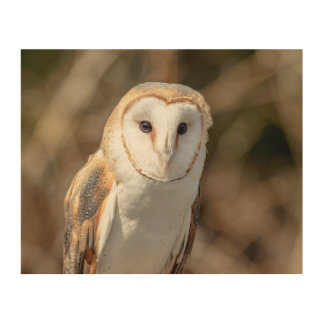 10x8 Barn Owl Wood Wall Art