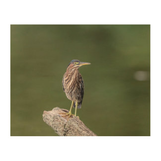10x8 Green Heron on a log Wood Wall Art
