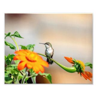 10x8 Hummingbird on a flowering plant Photo Print