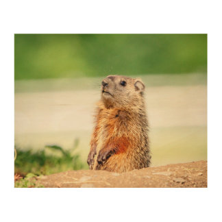 10x8 Young Groundhog Wood Wall Decor