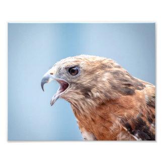 10x Red Shouldered Hawk Photo Print