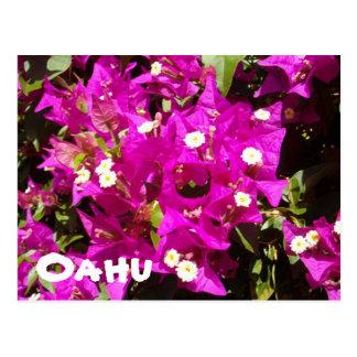 110, Oahu Postcard
