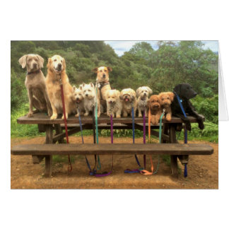"11 Pups in a Row ""Say Cheese"" - Greeting Card"