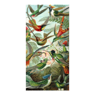 12 american humming birds breeds painted drawn photo cards
