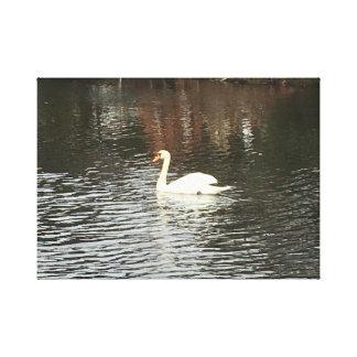 12 x12 Swan Canvas Print