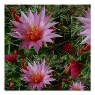 """12x12"""" Wild CACTUS Flowers: Pink Positive Energy Poster"""