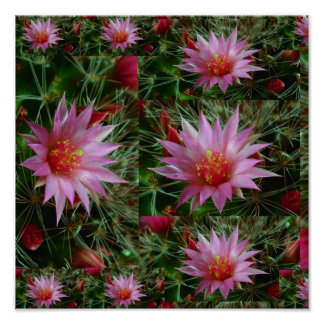 """12x12"""" Wild CACTUS Flowers: Pink Positive Energy Posters"""
