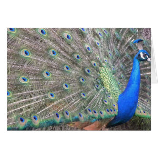 142 Peacock Side View Greeting Cards