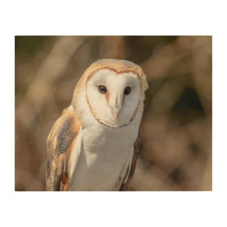 14x11 Barn Owl Wood Wall Decor