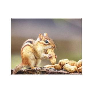 14x11 Chipmunk eating a peanut Canvas Print