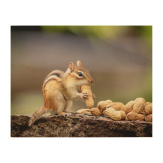 14x11 Chipmunk eating a peanut Wood Print