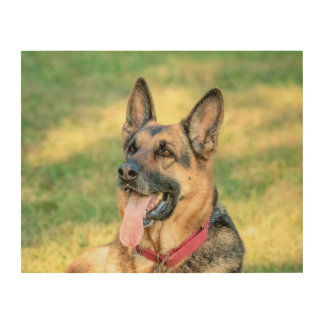 14x11 German Shepard Wood Wall Decor