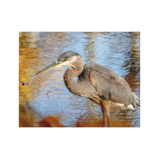14x11 Great Blue Heron framed with fall foliage Canvas Print