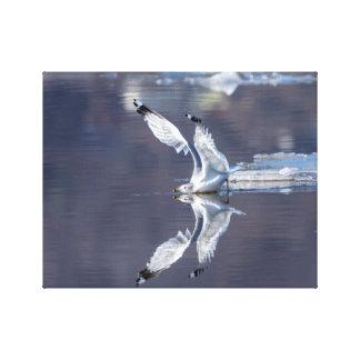 14x11 Gull Reflections Canvas Print