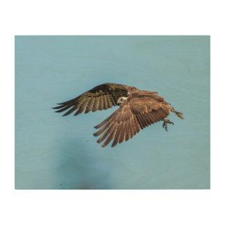 14x11 Osprey at Honeymoon Island State Park Wood Wall Decor