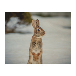 14x11 Rabbit in the snow Wood Wall Decor