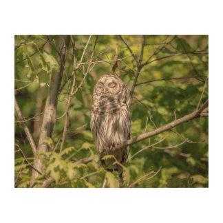 14x11 Sleepy Barred Owl Wood Wall Art