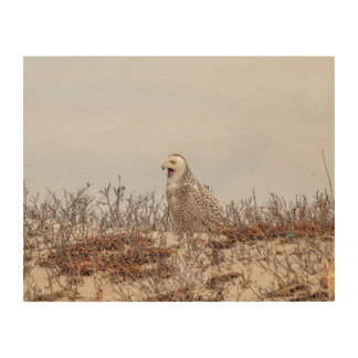 14x11 Snowy owl sitting on the beach Wood Wall Decor