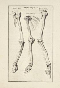 Arm Bone Art & Wall Décor | Zazzle com au