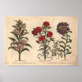 1757 Botanical Flower Art Print Balsamina