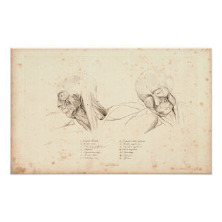 1833 Head & Neck Muscles Vintage Anatomy Print