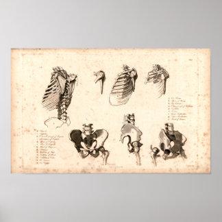 1833 Skeletal Vintage Anatomy Print