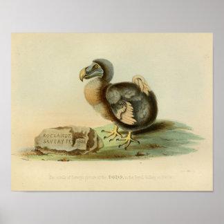 1848 Dodo Bird Vintage Color Print