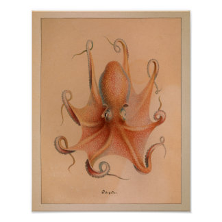 1851 Vintage Color Octopus Print